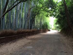 竹林image